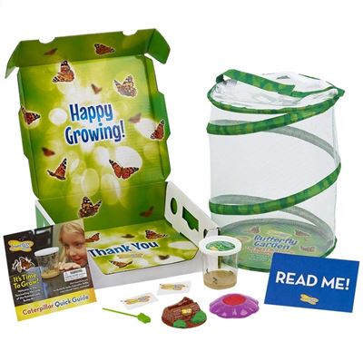 Educational toys - insect lore butterfly garden